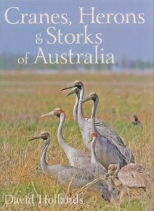 Cranes Herons and Storks of Australia